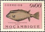 Tetrosomus concatenatus