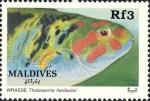 Thalassoma hardwicke