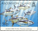 Thunnus alalunga