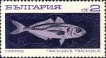 Trachurus trachurus