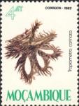 Tropiometra carinata