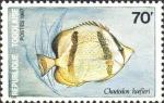 Chaetodon hoefleri