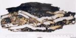 Teredo navalis Linnaeus, 1758