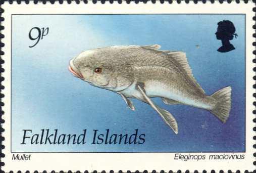 Eleginops maclovinus