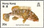 Epinephelus akaara