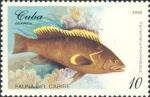Epinephelus flavolimbatus