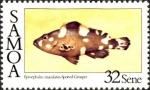 Epinephelus maculatus