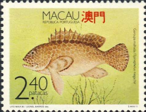 Epinephelus megachir