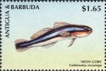 Gobiosoma oceanops