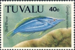 Gomphosus varius