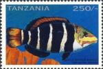 Hemigymnus fasciatus