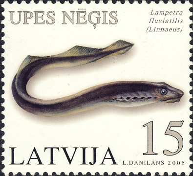 Lampetra fluviatilis