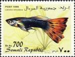 Lebistes reticulatus