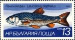 Leuciscus cephalus