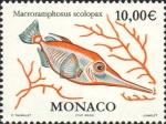 Macroramphosus scolopax