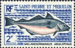Melanogrammus aeglefinus