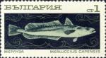 Merluccius capensis
