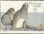 Monachus monachus