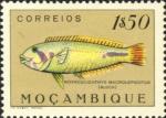 Novaculichthys macrolepidotus
