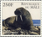 Odobenus rosmarus