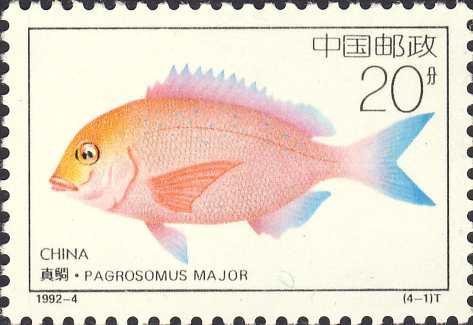 Pagrosomus major