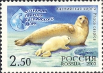 Phoca caspica
