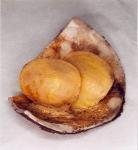 Beringius turtoni (Bean, 1834)