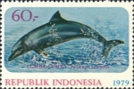 Tursiops aduncus