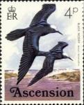 Anous tenuirostris
