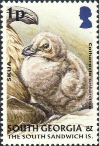 Stercorarius antarcticus