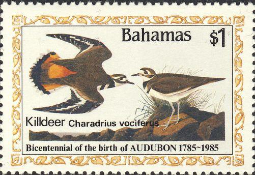 Charadrius vociferus