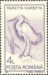 Egretta garzetta