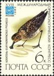 Eurynorhynchus pygmeus