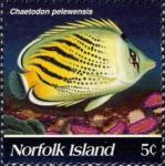 Chaetodon pelewensis