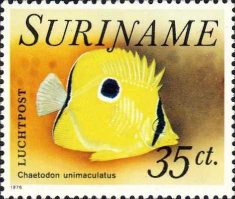 Chaetodon unimaculatus