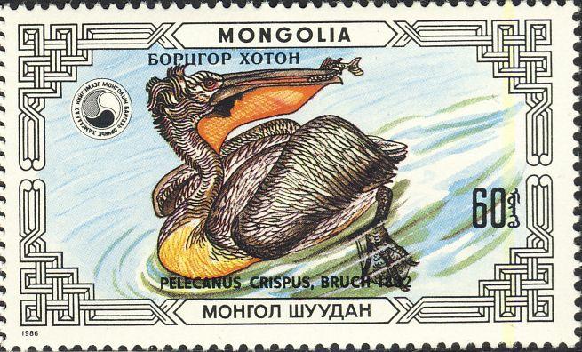 Pelecanus crispus