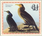 Phalacrocorax penicillatus