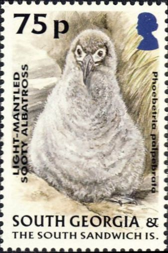 Phoebetria palpebrata
