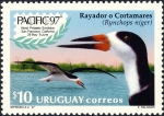 Rynchops niger