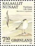 Stercorarius longicaudus