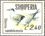 Sterna sandvicensis