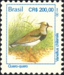 Vanellus chilensis