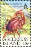 Gecarcinus lagostoma