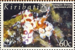 Hymenocera picta