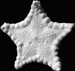 Ryukuaster aboral surface