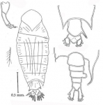 Crustacea (crustaceans)