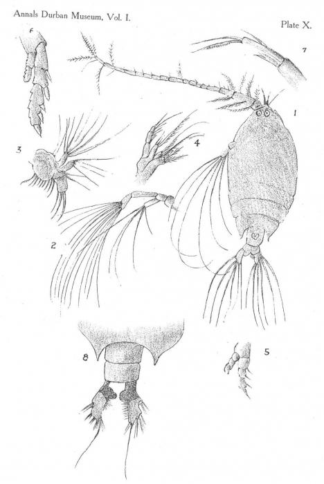 P. speciosus