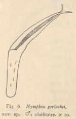 Giltay (1934, fig. 06)