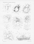 Images per theme