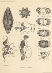 Zuidpoolexpeditie 1897-1899